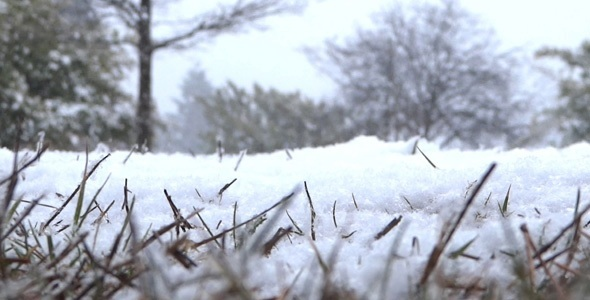 Snowing Ground Grass In Winter Forest