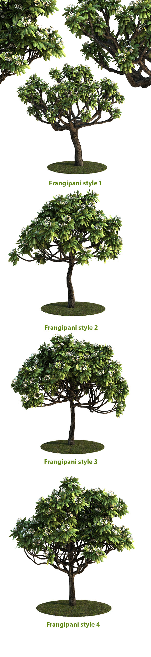 Frangipani Tree v.3 - 3DOcean Item for Sale