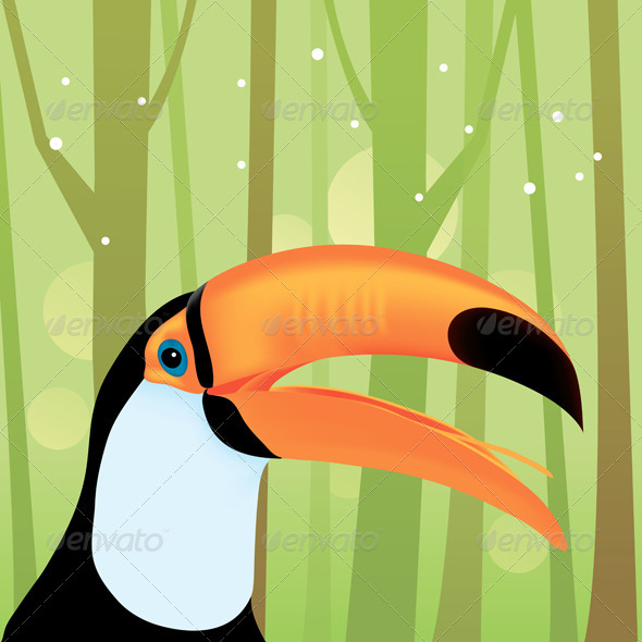 Toucan Bird at The Jungle - Animals Characters