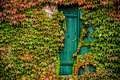 Ivy Window, Alsace - PhotoDune Item for Sale