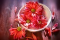 Pink daisies in white bowl - PhotoDune Item for Sale