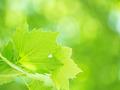Fresh green foliage background - PhotoDune Item for Sale