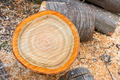Heap of firewood cutting logs - PhotoDune Item for Sale