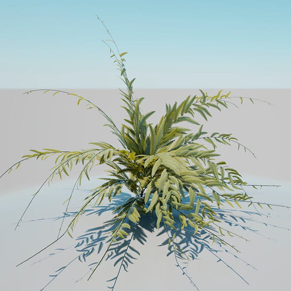 African shrub - 3DOcean Item for Sale