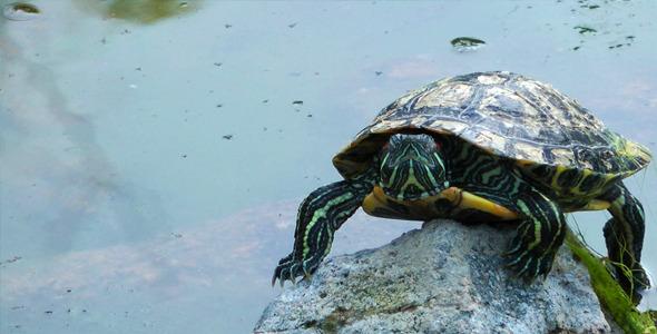 Turtle and Lake