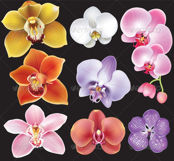 Collection of Orchid Flowers