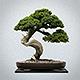 Zen-userpic