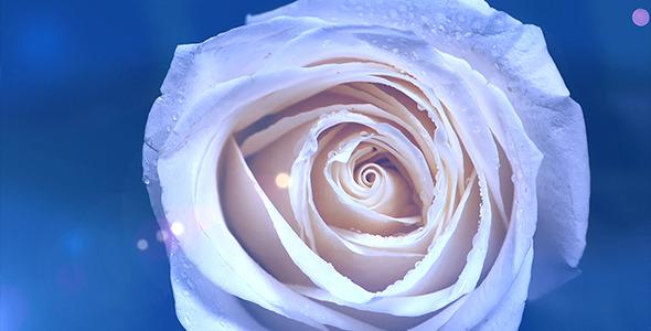 Rose Rotation