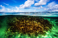 Coral garden underwater - PhotoDune Item for Sale