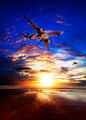 Evening flight - PhotoDune Item for Sale