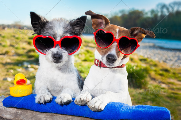 two dogs in love enjoying the summer holidays