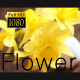 The Flower - VideoHive Item for Sale