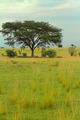 Ugandan Savanna - PhotoDune Item for Sale