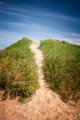 Path to beach over grassy sand dunes - PhotoDune Item for Sale