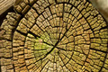 Radial cracks of sawed wood texture - PhotoDune Item for Sale