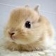 cutieBunny