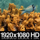 Fish Swim in a Reef of Tube Sponge - VideoHive Item for Sale