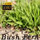 Bush Fern - VideoHive Item for Sale
