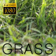 Slider Green Grass - VideoHive Item for Sale