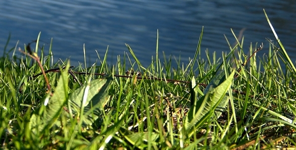 Grass and Water