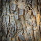bark texture of tree - PhotoDune Item for Sale