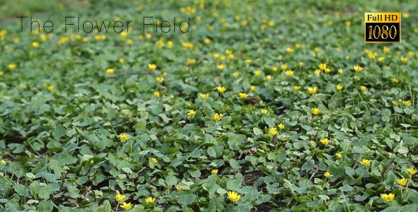 The Flower Field 3