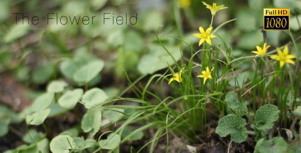 The Flower Field 7