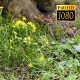 Tree On Flower Meadow 2 - VideoHive Item for Sale