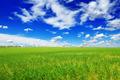 spring meadow - PhotoDune Item for Sale