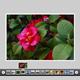AS3 XML Simplicity Gallery - ActiveDen Item for Sale