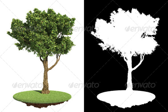 Garden Tree Isolated on White Background. - Stock Photo - Images