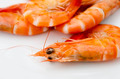 Shrimps close up - PhotoDune Item for Sale