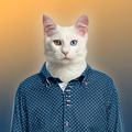 Cat wearing a spotted shirt, colored background - PhotoDune Item for Sale