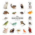 poster of pets in german - PhotoDune Item for Sale