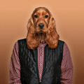 English Cocker spaniel wearing a shirt and jacket, colored background - PhotoDune Item for Sale
