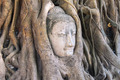 Head of Sandstone Buddha in The Tree Roots at Wat Mahathat, Ayut - PhotoDune Item for Sale