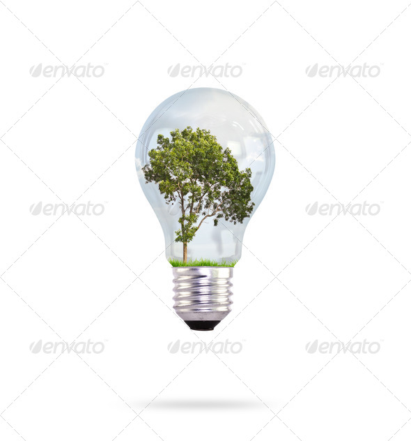 Eco concept: green tree growing in a bulb. - Stock Photo - Images