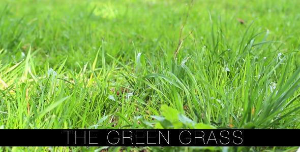 The Green Grass 2