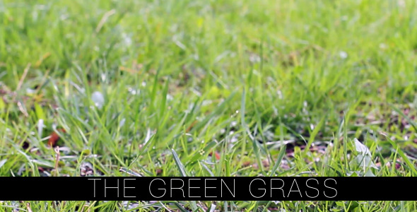 The Green Grass 4