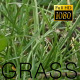 The Green Grass 6 - VideoHive Item for Sale