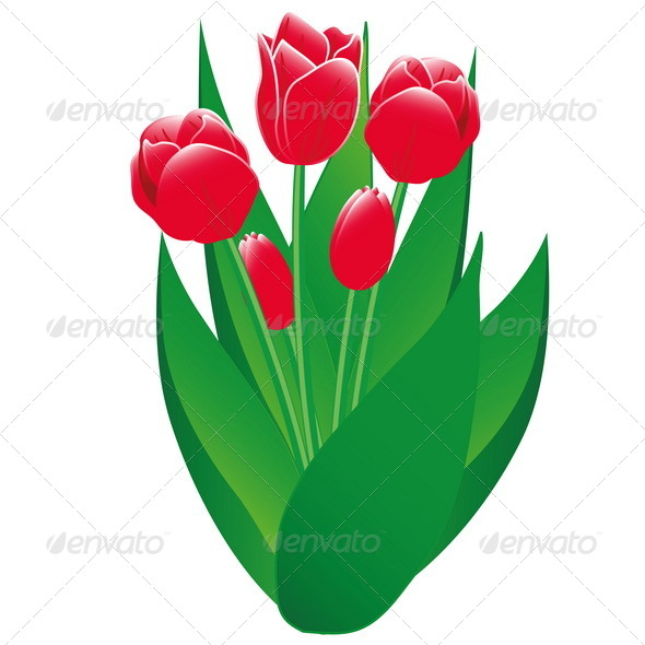 GraphicRiver Red Tulips Isolated Object 7505080