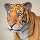 Realistic Bengal Tiger