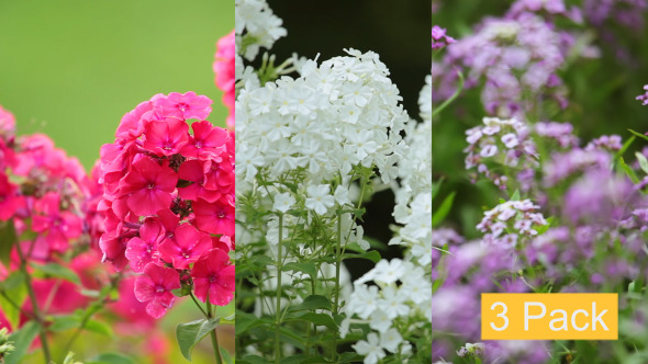 Multicolor Flowers 3-Pack