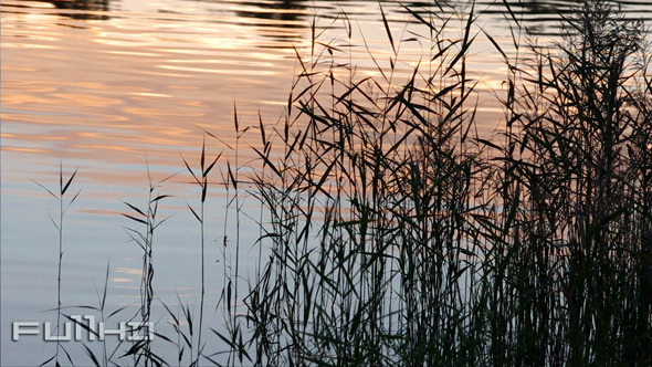Grass Silhouettes and Water Surface
