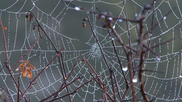 VideoHive Spider Web with Dew in the Early Morning 7511128