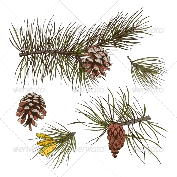 GraphicRiver Pine Branches Colored Print 7511207