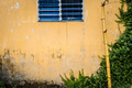 Grungy wall with window, bamboo and greenery. - PhotoDune Item for Sale