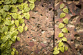 Old grungy stone wall with green leaves. - PhotoDune Item for Sale