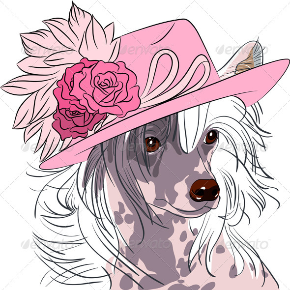 GraphicRiver Hipster Dog Chinese Crested Breed 7522386