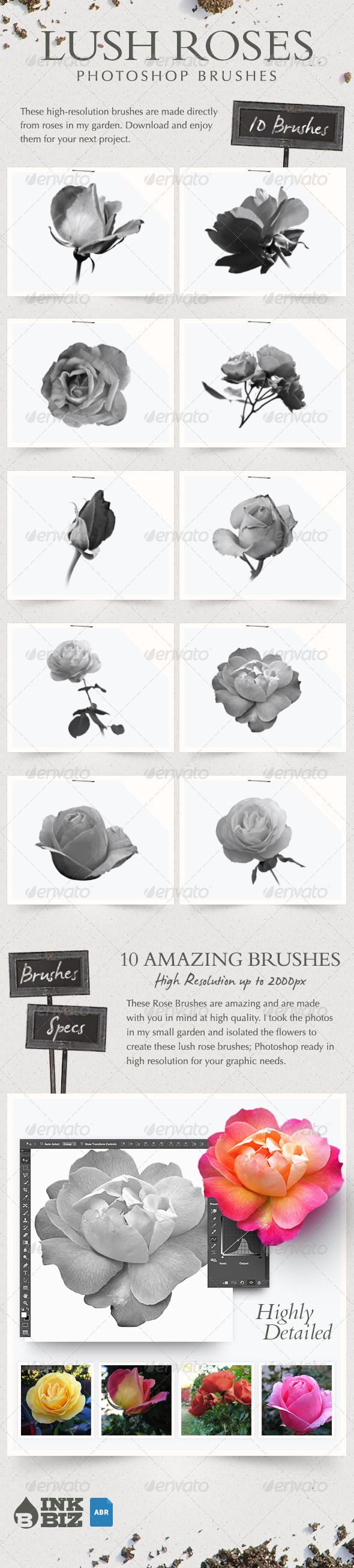 GraphicRiver Lush Roses Photoshop Brushes 7525021
